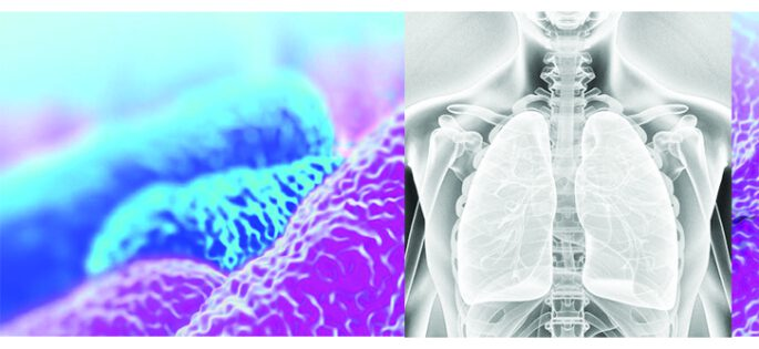 lungs-picture-website